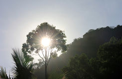 The Sun reflecting through the bushes. Royalty Free Stock Image