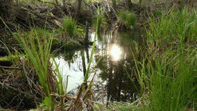 Sun reflection in the forest pond. Clean and bright daytime.  stock video