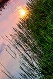 Sun Reflection. At Naarderbos, Naarden, Netherlands royalty free stock image