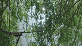 Sun Reflection in Pond through Weeping Willow Tree Lense Flare stock video