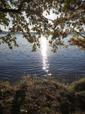 Sun reflects in water. Sun reflects in a water- covered tree royalty free stock photos