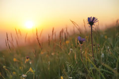 Sun rise. The sunrise Landscape in grassland Royalty Free Stock Images