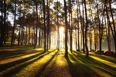 Sun Rise At Pang-ung, Pine Forest In Thailand. Popular Place For Set Up The Tent, Camping And Travel Stock Image
