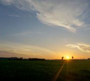 Sun rise. On a Field in Thailand Royalty Free Stock Photo