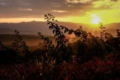 Sun rise at Khao Yai Stock Image