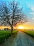 Sun Rise Morning Nature royalty free stock image