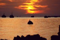 Sun rise at rock sea beach. The rising sun silhouettes the flight of the seagull across the ocean Royalty Free Stock Photos