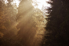 Sun rise in a wood Royalty Free Stock Photos