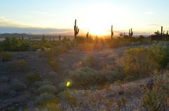 Morning light on desert road cactus landscape. Sun rises along a remote desert road in the American Southwest tall saguaro cactus line the horizon Royalty Free Stock Image