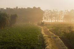 Morning scene , agriculture land - rural India. Sun rises in the background, over a green agriculture field. Rural Indian scene. Nature stock image Royalty Free Stock Images