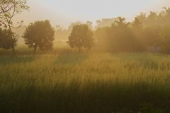 Morning scene , agriculture land - rural India. Sun rises in the background, sunrays falling over a green agriculture field. Rural Indian scene. Nature stock Stock Images