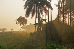 Morning scene , agriculture land - rural India. Sun rises in the background, sunrays falling over a green agriculture field. Rural Indian scene. Nature stock Stock Photos