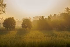 Morning scene , agriculture land - rural India. Sun rises in the background, sunrays falling over a green agriculture field. Rural Indian scene. Nature stock Stock Photography