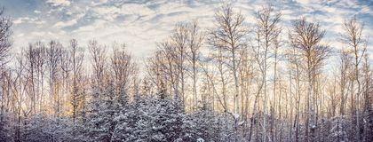 Warm dawn light on a snowy country morning stock photos
