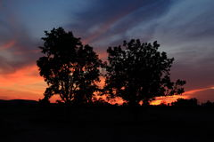 Sun rises behind the tree. Sun rises behind the tree with burning sky field royalty free stock image