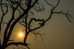 Sun rises behind  Tree Royalty Free Stock Photography