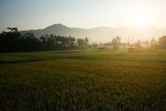 The sun rises on the mountain. The sun rises on a mountain near the rice fields royalty free stock photos