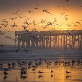 Sunrise over a fishing Pier and flying birds. The Sun rises over the Main Street Pier on a hazy morning as birds flock on the beach and in the sky in Daytona Royalty Free Stock Images