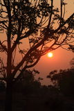 Sun rises over a tree. Sun rises over a tree in countryside royalty free stock photography