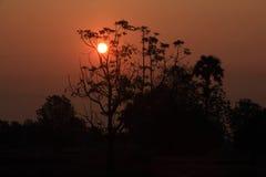 Sun rises over a tree. Sun rises over a tree in countryside stock photo