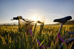 Sun rises over the wheat fields with bike in the forest Stock Photo