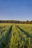 Sun rises over the wheat fields with roads and bike in the forest Royalty Free Stock Images