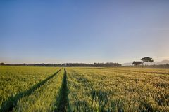 Sun rises over the wheat fields with roads in the forest Royalty Free Stock Photography