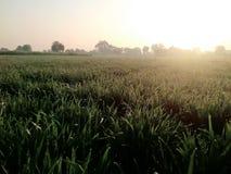 Sun rises. Wih water royalty free stock photo
