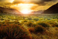 Sun rising behind grass field in open country of new zealand sce Royalty Free Stock Photo