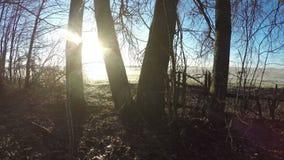 Sun rising behind old trees, time lapse 4K. Sun rising behind old linden trees with wooden fence in misty autumn morning, time lapse 4K stock footage