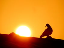 Sun is rising behind the perched bird Royalty Free Stock Photography
