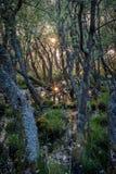 Sun rising in bog heathland. Sun rising in wet bog heathland with moss stock image