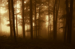 Sun rising in a dark forest with fog in autumn. Sun rising in a dark forest with thick fog in autumn Royalty Free Stock Photo