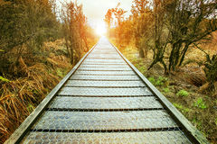 Sun rising end of perspective wood walking path in natural wild Stock Photography