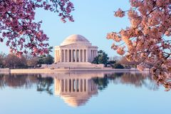 Beautiful early morning Jefferson Memorial with cherry blossoms royalty free stock photo