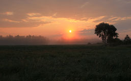 Sun rising over the field Royalty Free Stock Images
