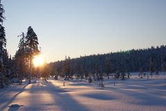 Sun rising over snowy Lapland forrest, Finland. 