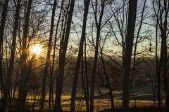 Sun rising and shining over silhouette tree branches stock photography