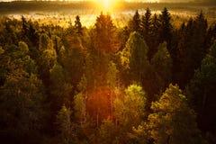Sun Rising at Swamp Royalty Free Stock Image