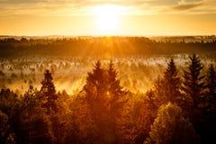 Sun Rising at Swamp Stock Photo