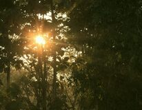 Sun rising through the trees, seen from the watchtower, Chilapata Stock Photography