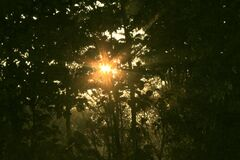 Sun rising through the trees, seen from watchtower, Chilapata Stock Images
