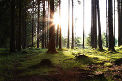 Sun rising in the woods. With sunray and green meadow stock image