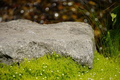 Sun rock. A rock catches the summer sun with green grass in the front and water in the back Stock Image