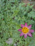Sun rose Photographie stock