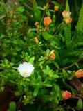 Sun rose Royalty Free Stock Image