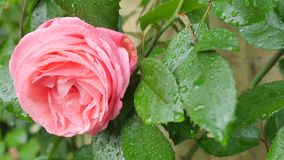 The sun rose in raindrops.  Stock Photo