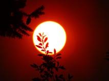Sun rosso in cielo fumoso Fotografia Stock