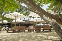 Sun-Ruhesessel und -sonnenschirme auf dem Strand mit Palme Stockfoto