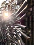 Sun& x27; s光芒通过篱芭,背景,早晨太阳做他们的方式 库存照片